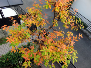Colored_leaves_0120_600