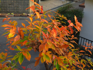 Colored_leaves_0124_600