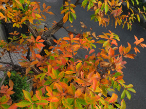 Colored_leaves_0125_600